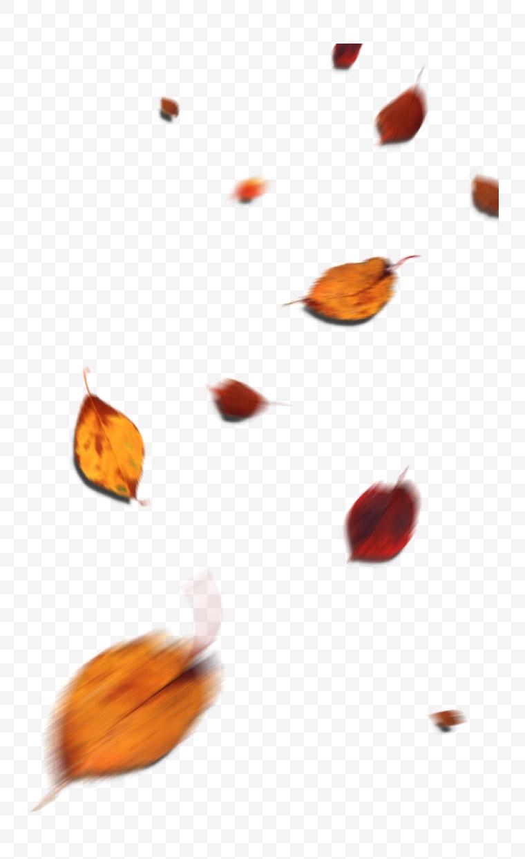 叶子 树叶 秋天 秋季 黄色的树叶 叶子 落叶