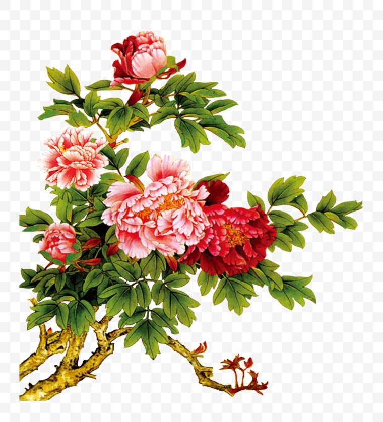 牡丹花素材_古典牡丹花素材-大美工素材网_高质量免费素材共享平台-大