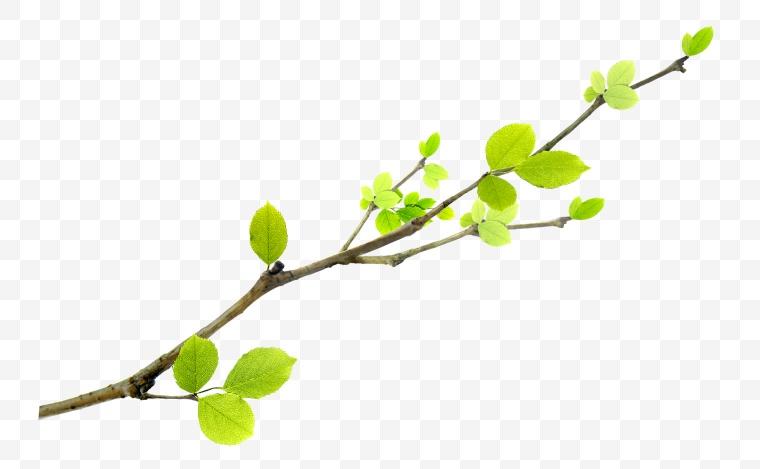 绿叶 树叶 叶子 春天 绿色环保 环保 绿色树叶 叶片 绿色 树枝