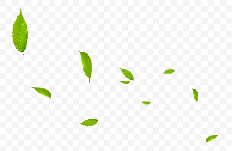 绿叶 树叶 叶子 春天 绿色环保 环保 绿色树叶 叶片 绿色