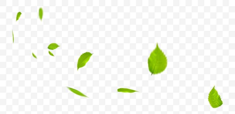 绿叶 叶子 绿色 春天 树叶 自然