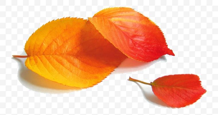 树叶 秋天 秋天树叶 落叶 秋季 深秋 黄色的树叶 秋天的树叶