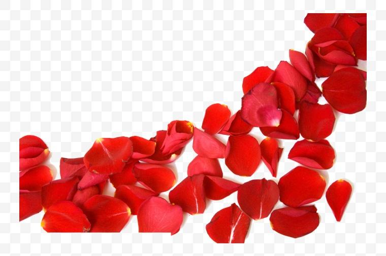 花瓣 玫瑰花瓣 红色花瓣