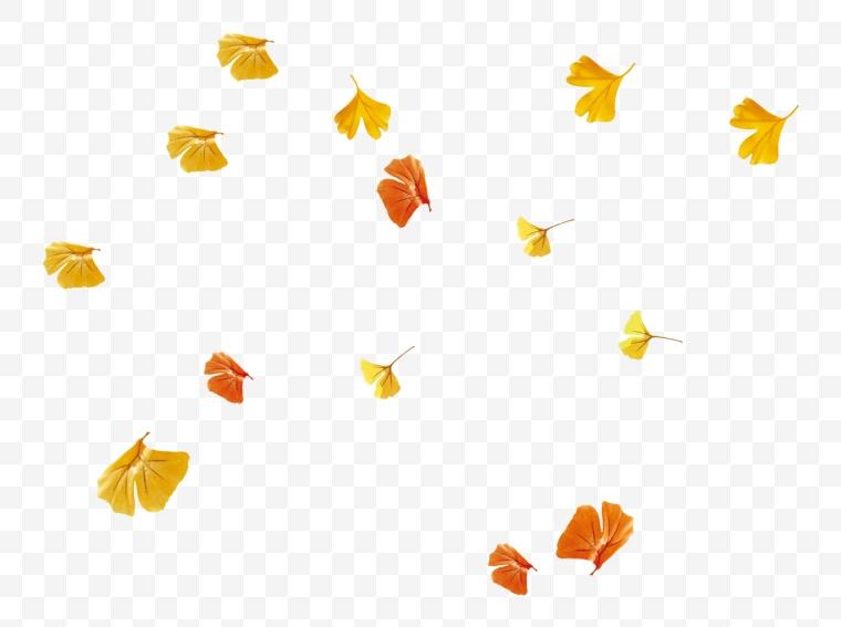 落叶 秋天 秋季 树叶 秋天的落叶 秋叶