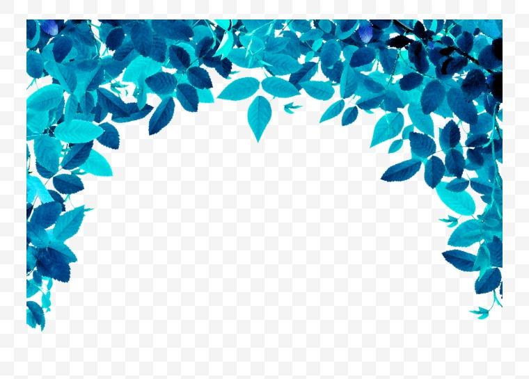 树叶 叶子 蓝色叶子 清凉叶子 清凉 夏天