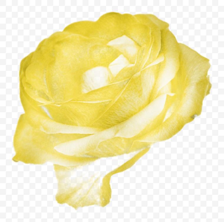 花 花朵 花瓣 黄花 玫瑰花 纸花
