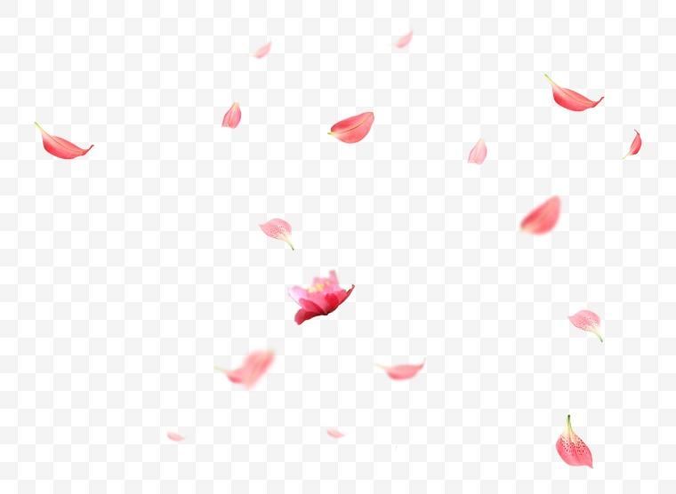 花瓣 花瓣飘落 飘落花瓣 玫瑰花瓣 红色花瓣