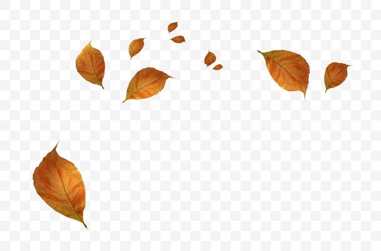 树叶 叶子 落叶 自然 飘零的树叶 散落的树叶