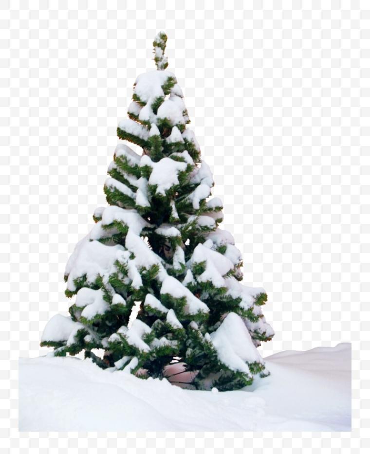 冬天 雪花 雪 雪景 雪松 松树 圣诞节
