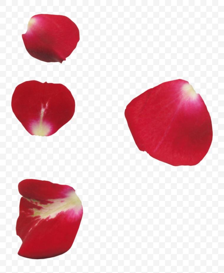 花瓣 花 鲜花 鲜花瓣 玫瑰花瓣
