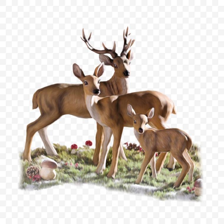 鹿 麋鹿 梅花鹿 动物 圣诞节