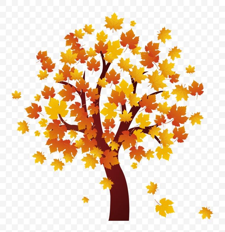 秋天的树 秋天 秋季 树 黄色树 枫叶