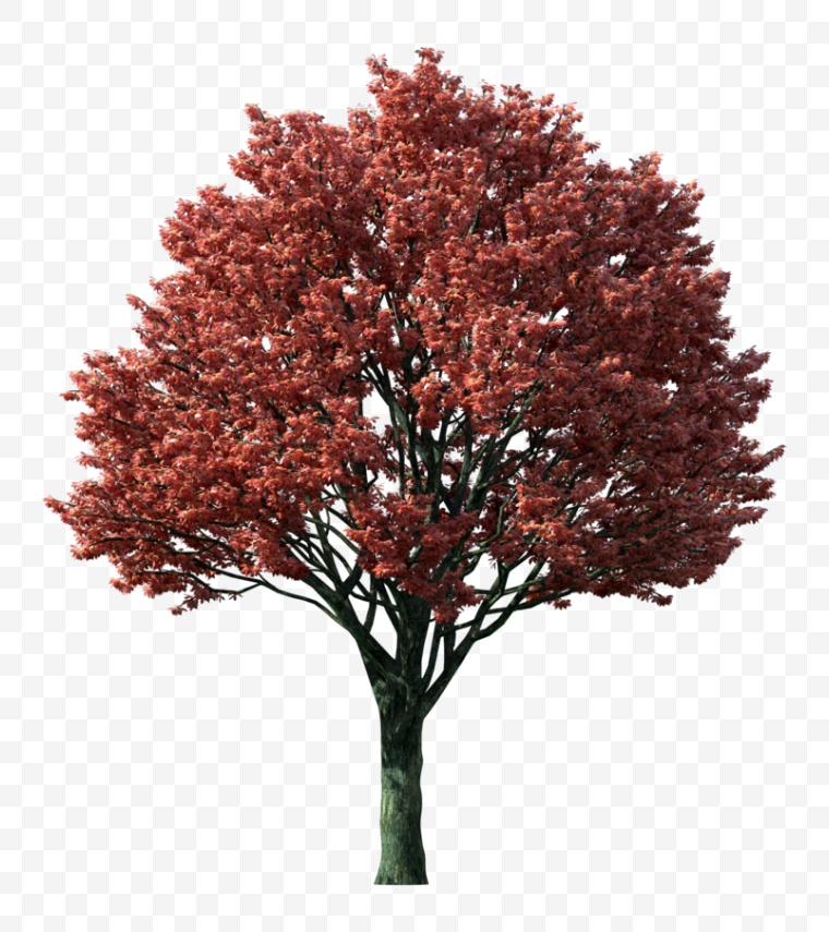 秋天的树 秋天 秋季 树 黄色树
