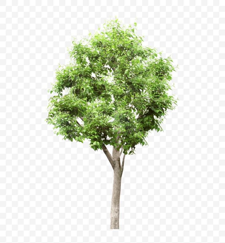 树 小树 绿树 环保 绿色 环境