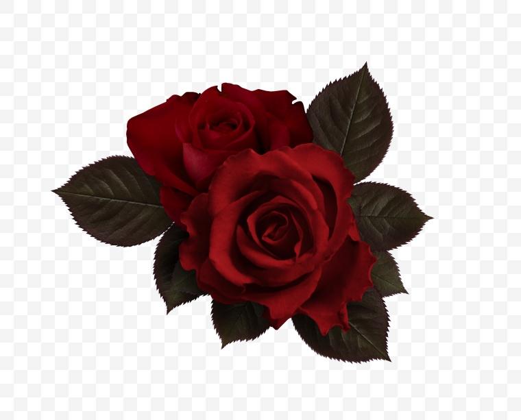 花 红花 玫瑰花 玫瑰 玫瑰花 花朵 鲜花