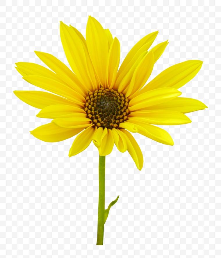 花 鲜花 花朵 黄花 菊花