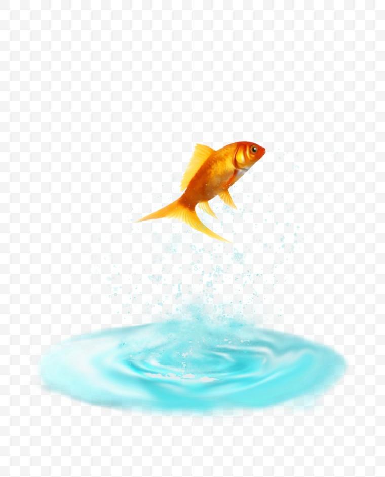 水 水波 水纹 水滴 水花 金鱼