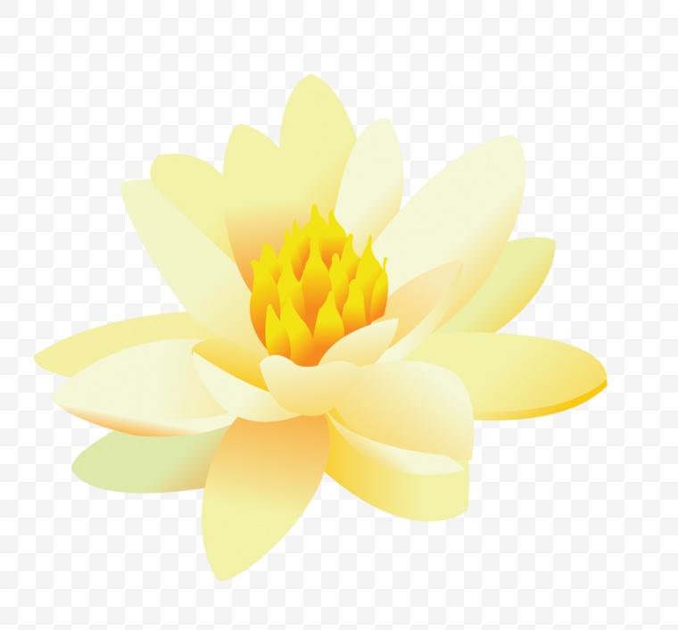 荷花 莲花 花 花朵 手绘 手绘荷花 自然